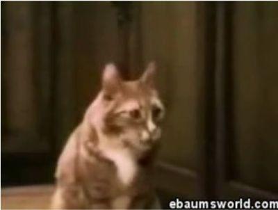 Talkcat